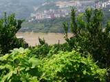 巴东椪柑三峡旅游生态果园:天然的氧吧