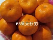 好吃的巴东无籽椪柑,浓郁香甜爽口脆嫩化渣的记忆