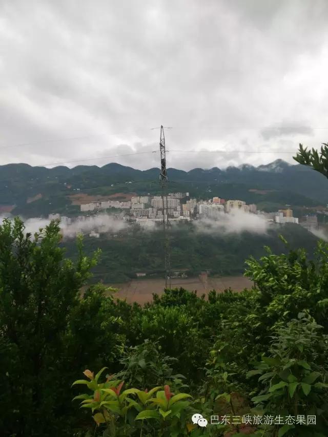 雨后长江北岸巴东东壤口乡清水走廊上的椪柑